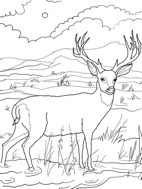 deer coloring pages online free coloring pages deer coloring page for kids