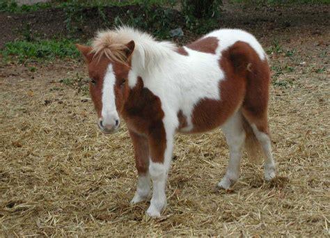 imagenes mamonas de cumpleaños tudo sobre cavalos poneis