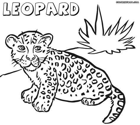 drawn leopard coloring page pencil and in color drawn