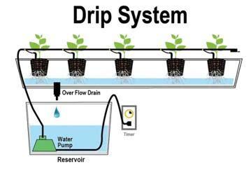 Sekam Bakar Untuk Akuaponik sistem tetes drip sistem