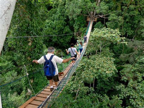 canopy amazon canopy amazon amazon nature tours paragon amazon rainforest tours in the tambopata amazon rainforest