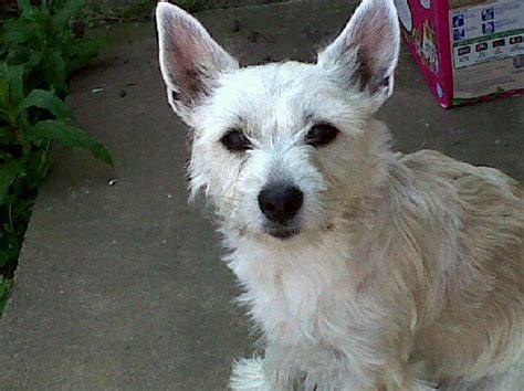 relaxers for dogs a loving and relaxed for sale leicester leicestershire pets4homes