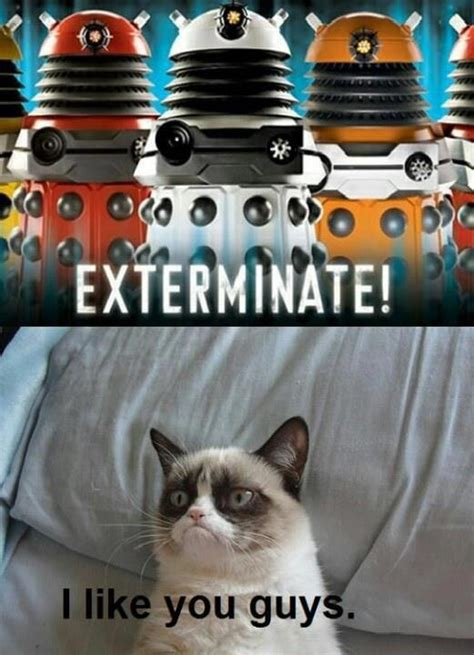 Doctor Who Cat Meme - oh grumpy cat doctor who pinterest