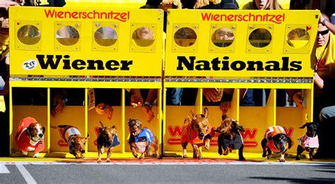 wiener nationals wienerschnitzel wiener nationals photos of the week for dec 24 27 2012 espn