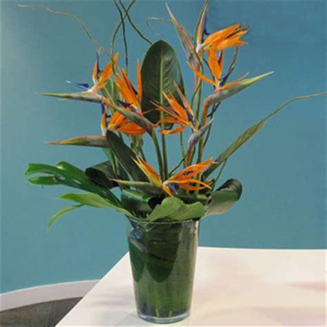Bird Of Paradise Flower Arrangement Vase by Paradise Vase