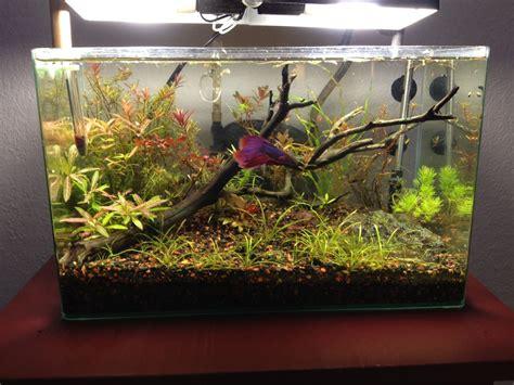 betta tank 6 gallon low tech betta tank beautiful tank includes a