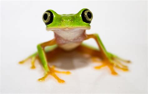 how did a frog get in my bathroom do frogs make good pets yes if you don t have the quot icks quot