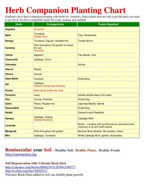 herb growing chart herb companion planting chart herbal gardens