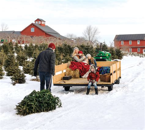 christmas tree farms in mystic ct tree guide types tips trivia yankee magazine