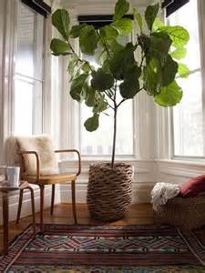 home interior plants 7 stylish ways to use indoor plants in your home s d 233 cor