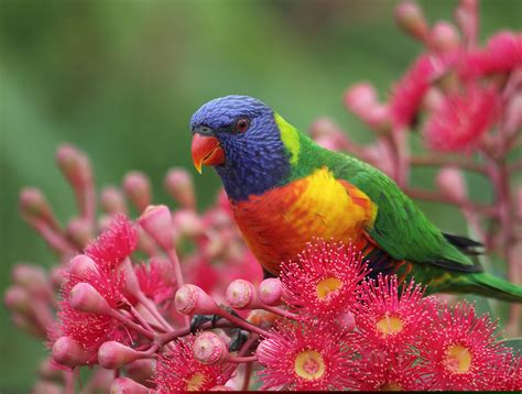 colorful names colorful birds names free images at clker vector