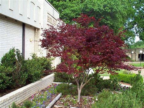 japanese maple corporate lawn care inc