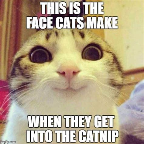 Cat Meme Faces - catnip face imgflip