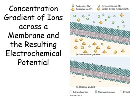 cell membrane powerpoint  id