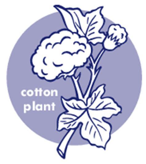 Cotton Plant Clip At Clker cotton plant plants assorted c cotton plant png html