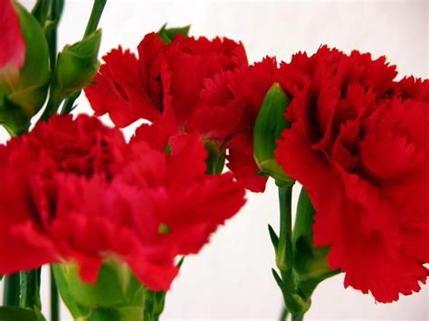 how to send flowers for valentines day reasons to send flowers for s day flower
