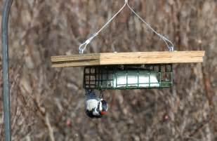 wood upside down suet feeder plans pdf plans