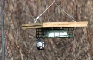 What Is Feeder Suet Feeder Bird Brains Tales
