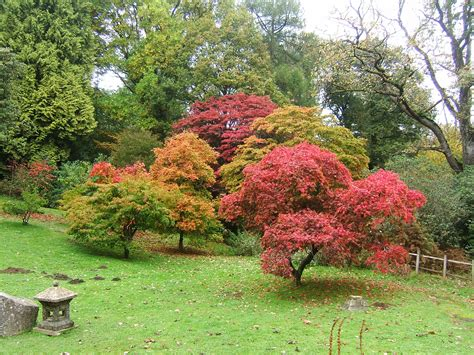file bryngarw country park japanese garden autmn maple jpg wikimedia commons
