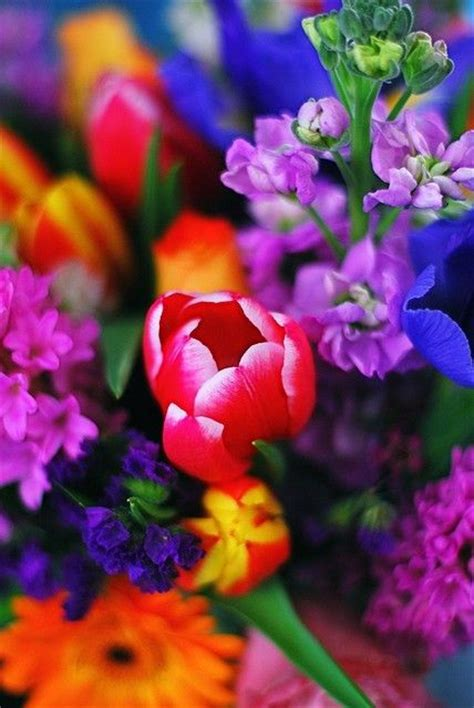 Bright Beautiful Colorful Flowers Flowers Pinterest Pictures Of Colorful Flowers
