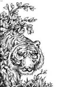 Tiger coloring page tiger colouring coloring sheet of tiger eye of the