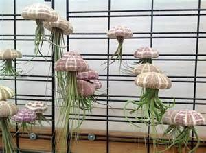 Air plants jellyfish and plants on pinterest