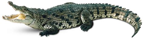 krokodil images crocodile wallpapers humor hq crocodile pictures 4k