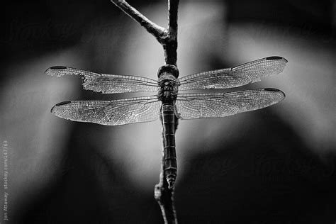 dragonfly with a broken wing by jon attaway wings