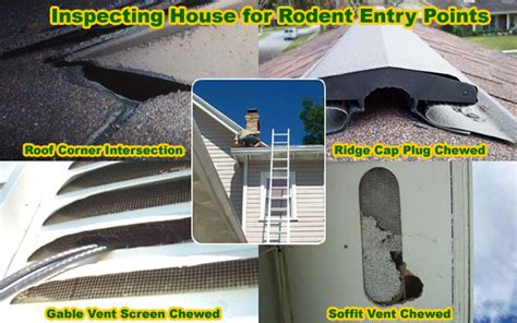 How To Get Rid Of Mice In Ceiling by How Is A Rat Getting In House Building Or Attic