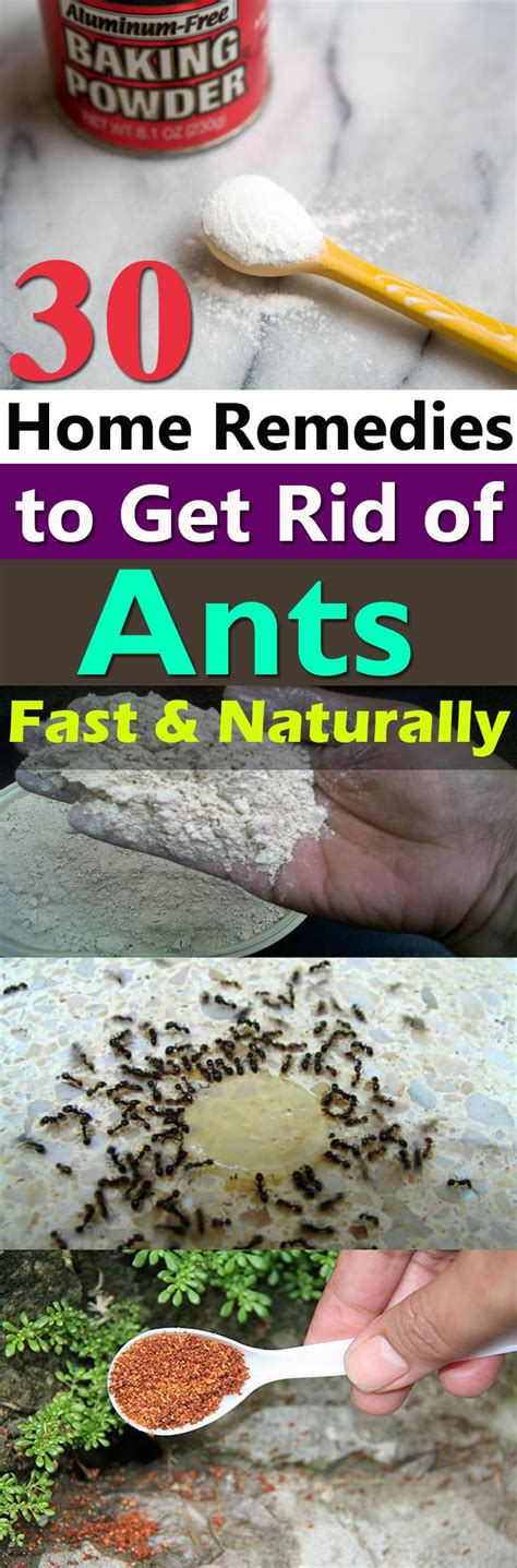 best 25 ant problem ideas on killing ants