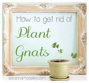 how to get rid of gnats in house plants garden