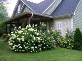 garten hortensie mit hortensien akzente im garten setzen