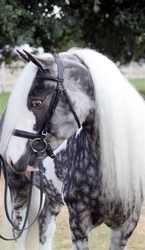 top  horses    unusual  beautiful colors