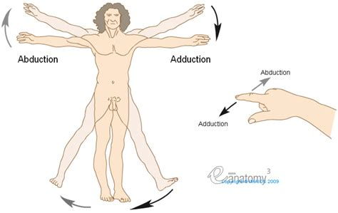 anatomical position diagram planes and motions used in macroscopic anatomy