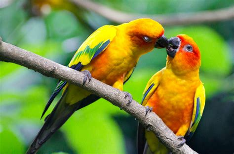 images of love birds hd love birds hd wallpapers beautiful loving birds