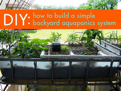 backyard aquaponics plans diy everything you need to to build a simple backyard aquaponics system inhabitat
