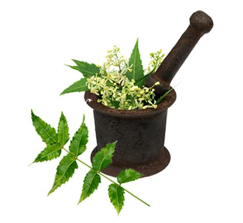 neem for dogs benefits of neem