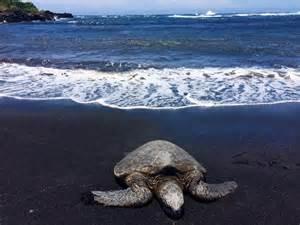 Black Sand Island by Big Island Hawaii Babymoon Part Deux Black Sand