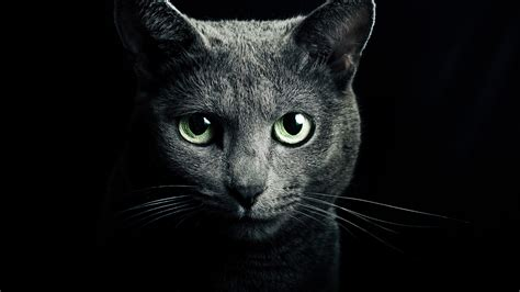 schwarze le black cats with green wallpaper