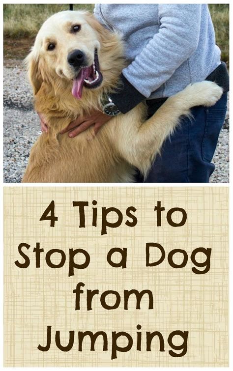 4 tips to stop a from jumping hundetr 230 ning og dyr