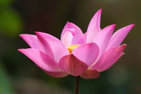 blooming lotus portland transformational spirituality root of the lotus
