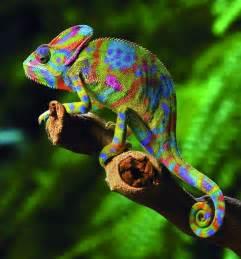 Light Skin Baby 25 Amazing Chameleon Pictures