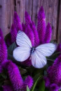 agréable Les Plus Belles Deco Interieur #5: admirable-photo-de-la-nature-professionnel-image-fleurie-paysage-nature-papillon-jolie.jpg