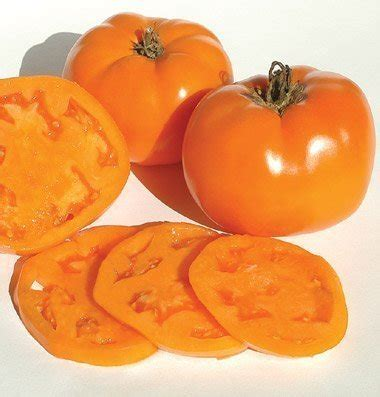 buy beefsteak tomato seeds