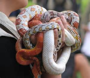 the benefits of small pet snakes pet snakes com