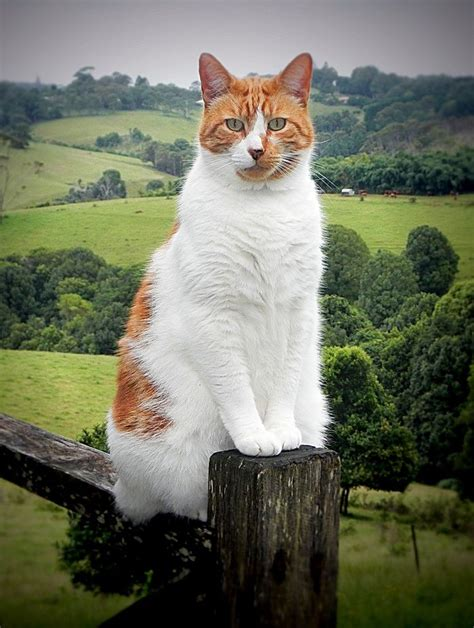 Kuas Cat 3in 1000 images about cats fences doors windows on white cats black cats