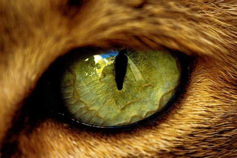 imagenes de ojos zoom lista animales con ojos incre 237 bles