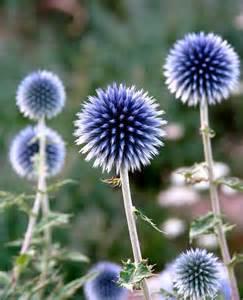 Best Florist Near Me by Garden Nurseries Near Me Garden Centres Near Me