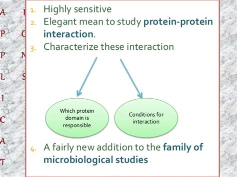 protein yeast yeast two hybrid system protein protein interaction