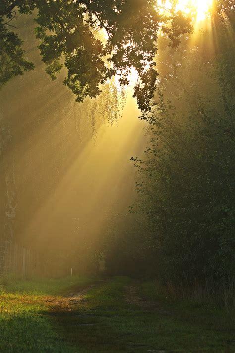 kostenlose foto baum natur wald ast licht stra 223 e sonnenlicht blatt blume gr 252 n kurve kostenlose foto baum natur wald gras ast licht sonne nebel sonnenaufgang